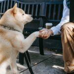Older man shaking hand of dog.